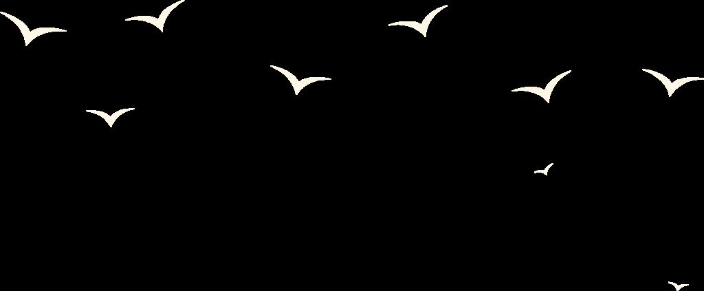 Drohnen-Luftaufnahmen